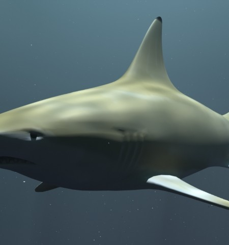 Black Tip Reef Shark_Preview 01