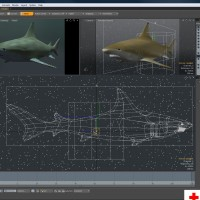 Black Tip Reef Shark_Preview 03