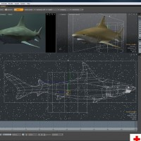 Black Tip Reef Shark_Preview 03-med