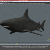 Black Tip Reef Shark_Wireframe