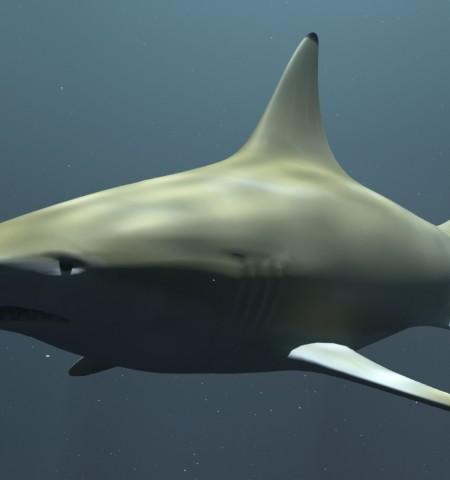 Black Tip Reef Shark_Preview 01