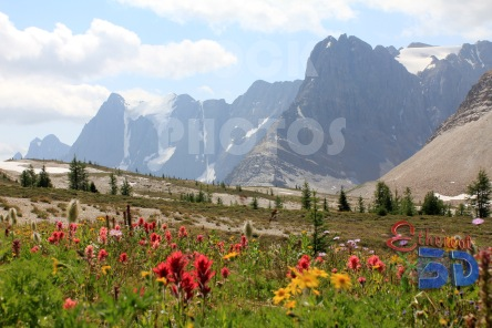 STK019_Rocky Mountain Flower Meadow.444x296